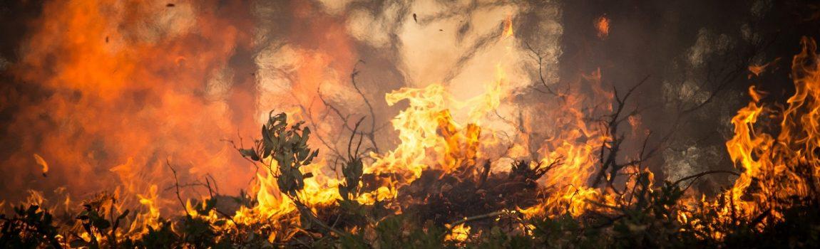 Angela Merkels verbrannte Erde